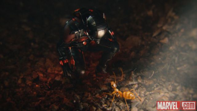 Ant Man with ants